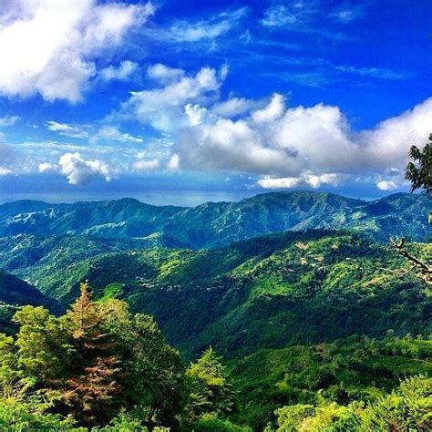 Blue Mountain Jamaican 853 best images about the land of my birth sweet jamaica on jamaican bobs and