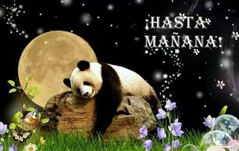 goodnight panda buenas 1683042484 hasta ma 241 ana buenas noches buenas noches goodnight