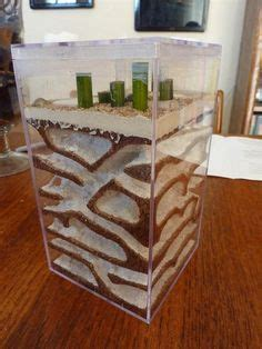 homemade ant farm ant farms