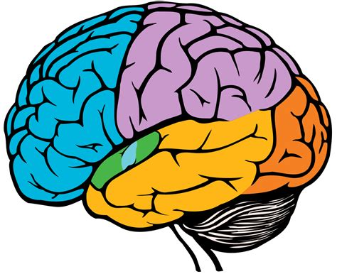 for the brain dementia australia dementia in my family