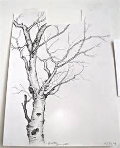 saturday morning sketch birch tree made by the brooke