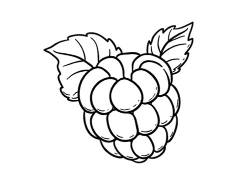 raspberry coloring page coloringcrew com