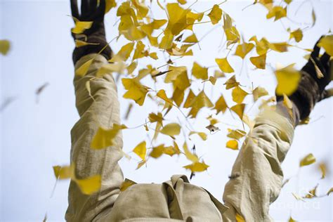 threw up yellow throwing up yellow autumn leaves photograph by mats silvan
