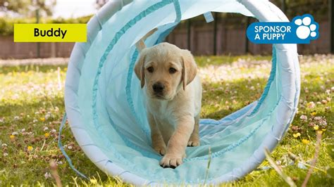how for dogs to puppies sponsor a guide puppy guide dogs