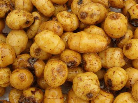 Tiger Nuts Milk, Kunun Aya or Horchata de Chufas   All