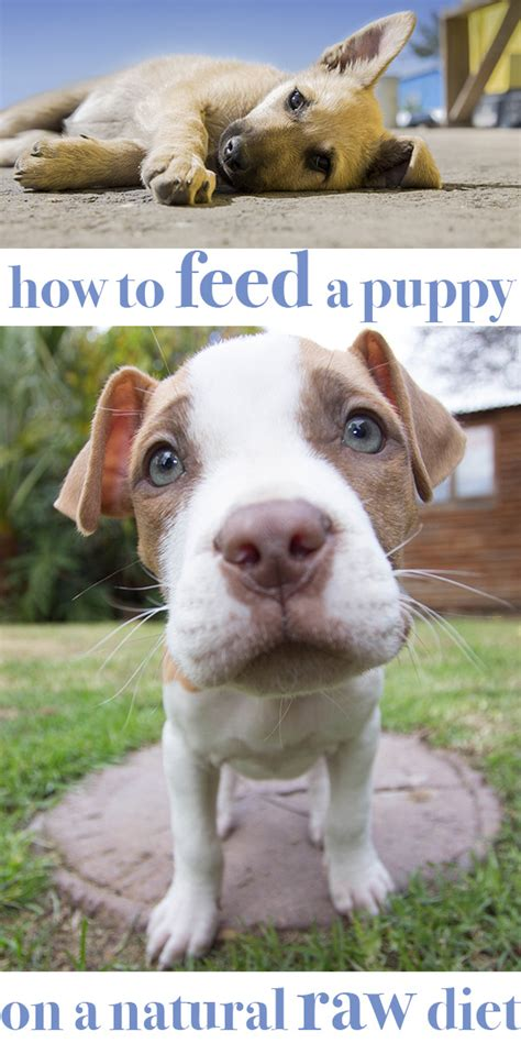 how much water to give a puppy how to feed your puppy on food