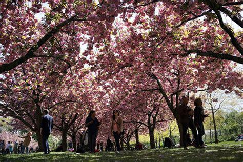 express botanic gardens greenery the world s most beautiful botanic