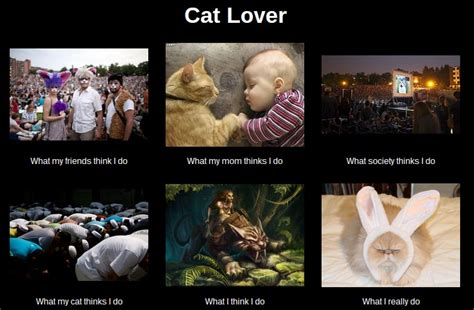 Meme Lover - cat lover meme what i really do by leftysmudgez on