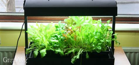 indoor growing lights uk using grow lights for salad in winter