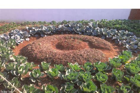 backyard cash crops backyard farming the untapped cash cow in urban areas