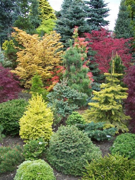 amazing conifer garden garden pinterest
