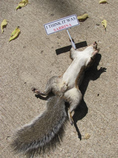 Road Kill by Roadkill Squirrel Www Pixshark Images Galleries