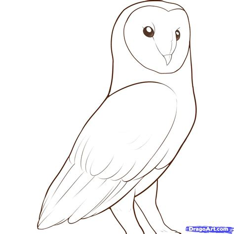 Barn Owl   Free Coloring Pages on Art Coloring Pages
