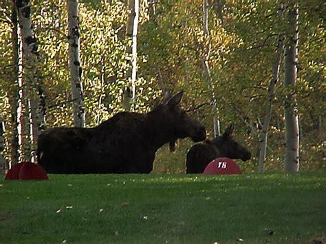 Yellowstone Golf Resort at Aspen Acres RV Park   Passport America Camping & RV Club
