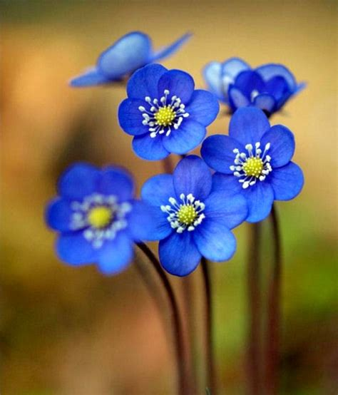 flores azules claras mariposa imagenes de archivo imagen 2050474 megustamucho 1 artesan 205 a en papel estucado y madera