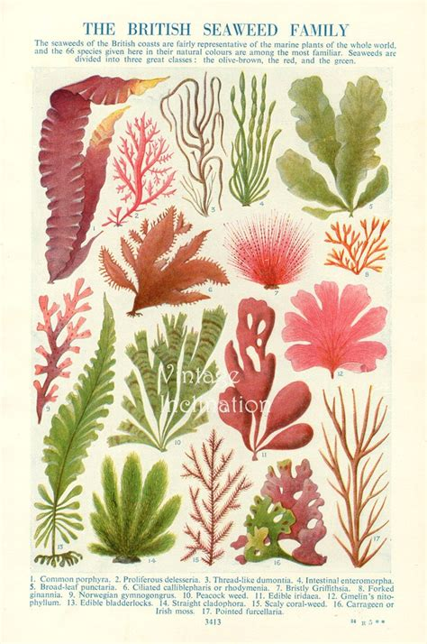 sea weeds shells and fossils classic reprint books 17 best images about vintage poster plant on
