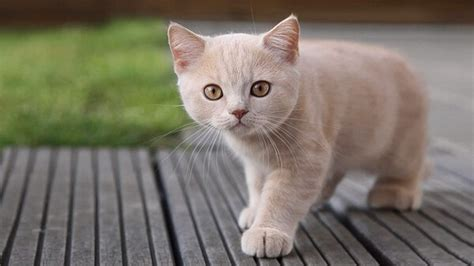 una noche un gato cuantos a 241 os vive un gato donde viven como nacen