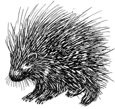 porcupine diagram file porcupine psf png the work of god s children