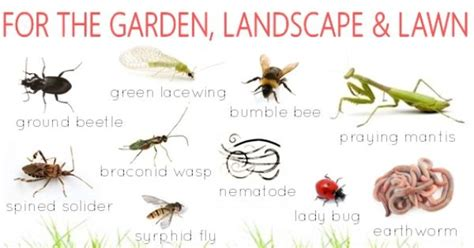 list of garden pests pest with beneficial insects list of insects and
