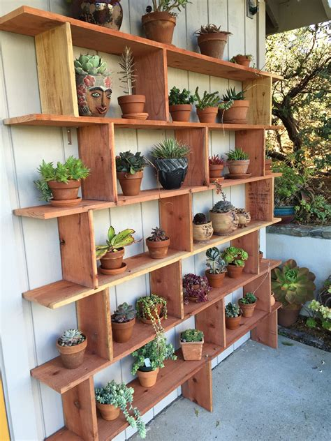 husbands wonderful succulent shelf garden shelves