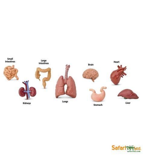 imagenes educativas cuerpo humano 211 rganos cuerpo humano montessori para todos