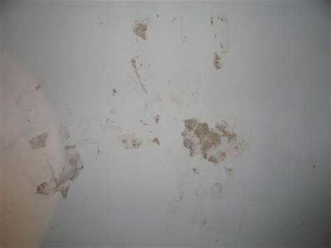 Termites Drywall Paper by Some Activity