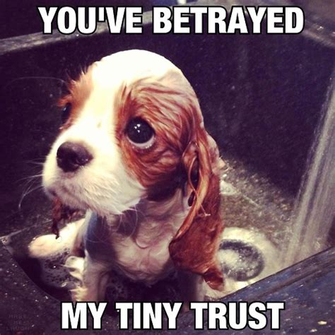 Trust Memes - tiny memes image memes at relatably com