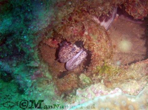 underwater stuff underwater photographer joshua milligan s gallery random