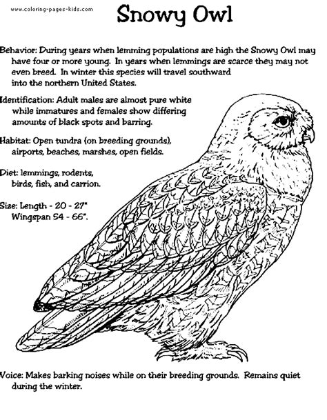 coloring page snowy owl snowy owl color page printables pinterest coloring