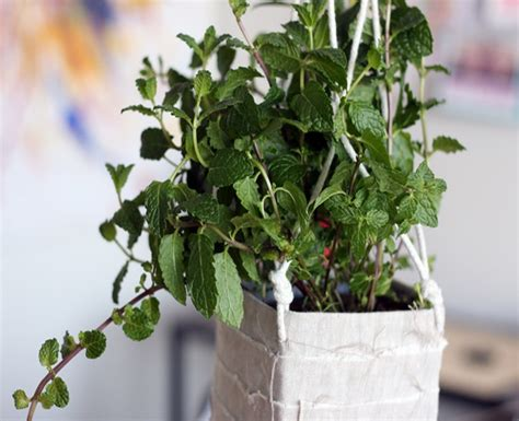 diy recycled hanging planter best use of waste material