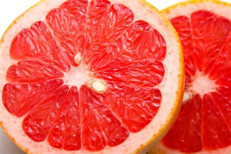 can dogs grapefruit can dogs eat grapefruit ultimate home