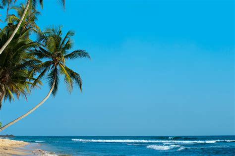 green trees  seashore  blue sky  stock photo