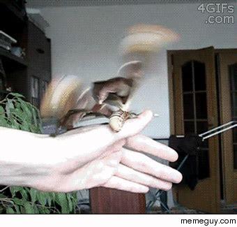 Moth Meme - the atlas moth meme guy
