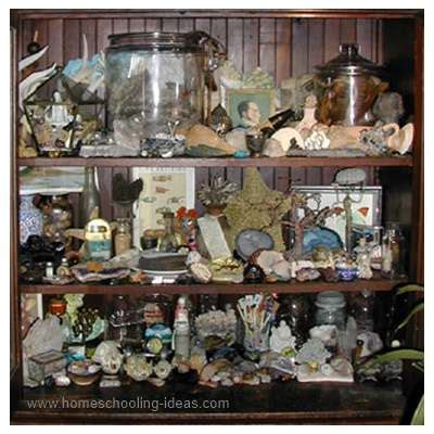 Cabinet Of Curiosities by Homeschooling Cabinet Of Curiosities
