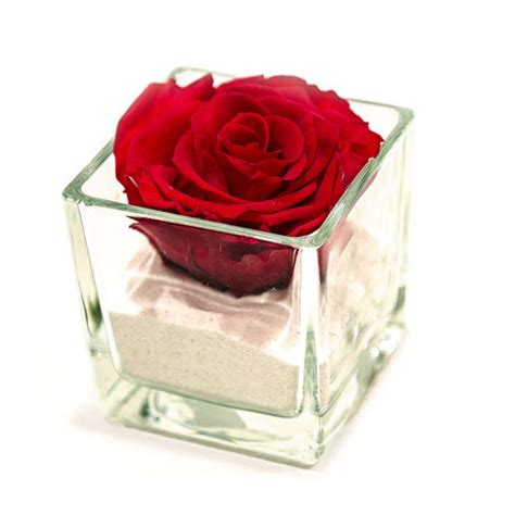 rosa in vaso rosa stabilizzata consegna fiori e per san