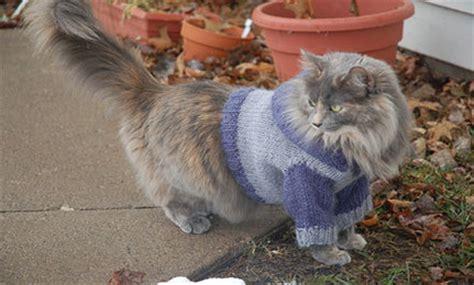 knit cat sweater pattern cat sweater knitting pattern a knitting