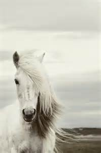 конь с розовой гривой книга читать онлайн