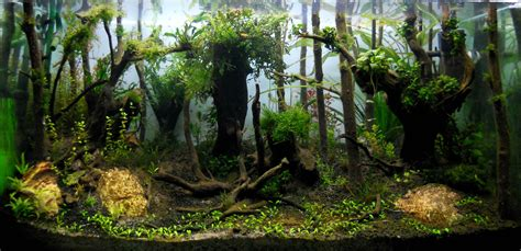 forest aquascape aquascape of the month june 2015 quot himalayan forest