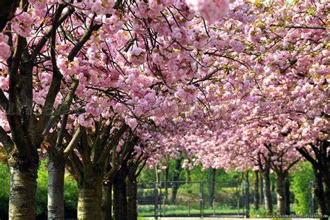 stassen fiori bilderbuch d 252 sseldorf fr 252 hling am kikweg
