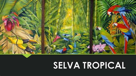 guitle en la selva edition books calam 233 o selva tropical