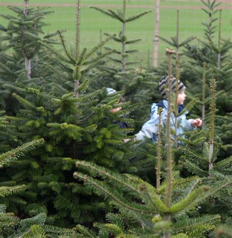 tannenbaum selber schlagen bonn weihnachtsbaum selber schlagen m 252 nchen agrar aktuell de