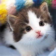猫 画像 に対する画像結果