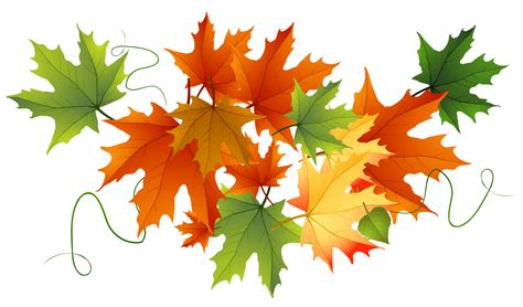 clipart autumn leaves autumn leaves clipart transparent background clipartxtras