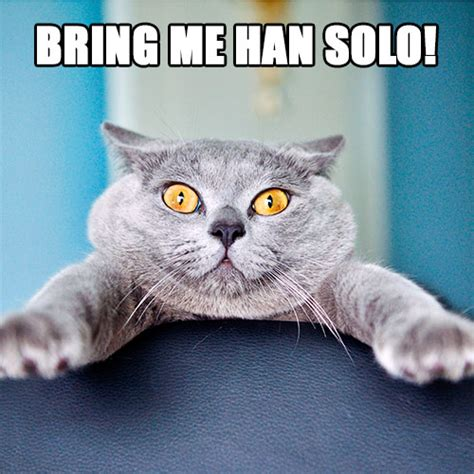 Star Wars Cat Meme - star wars cat memes