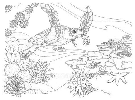 Coral Reef Coloring Page Underwater Pinterest Coral Reef Coloring Pages