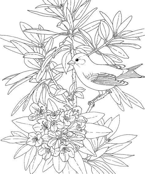 coloring pages of state birds and flowers free printable coloring page washington state bird and