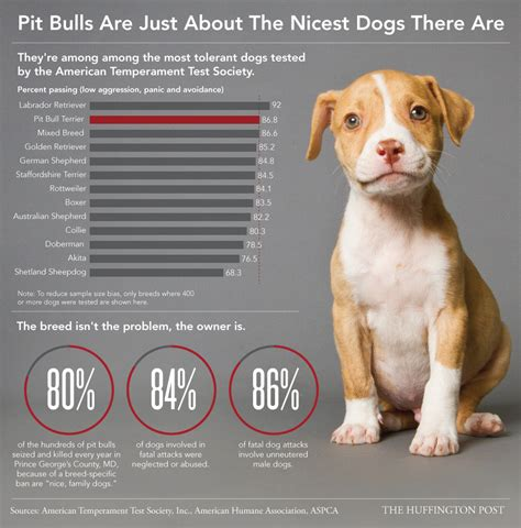 golden retriever bite statistics here s why you see so many pit bulls in shelters barkpost