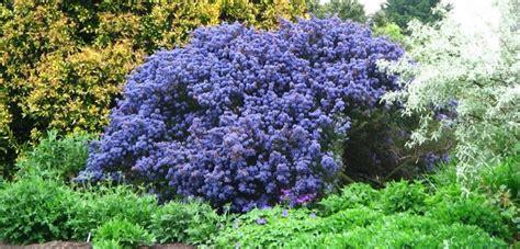 fiore da giardino piante perenni da giardino resistenti tutto l anno