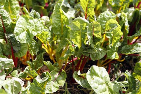 the best winter vegetables list countryside network