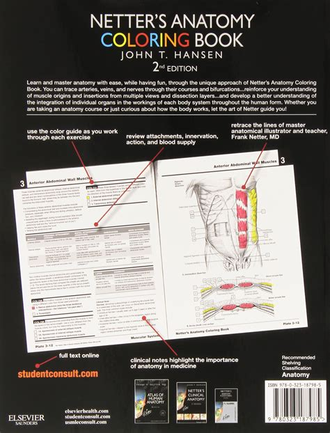musculoskeletal anatomy coloring book by joseph e muscolino 91 the anatomy coloring book 3rd edition